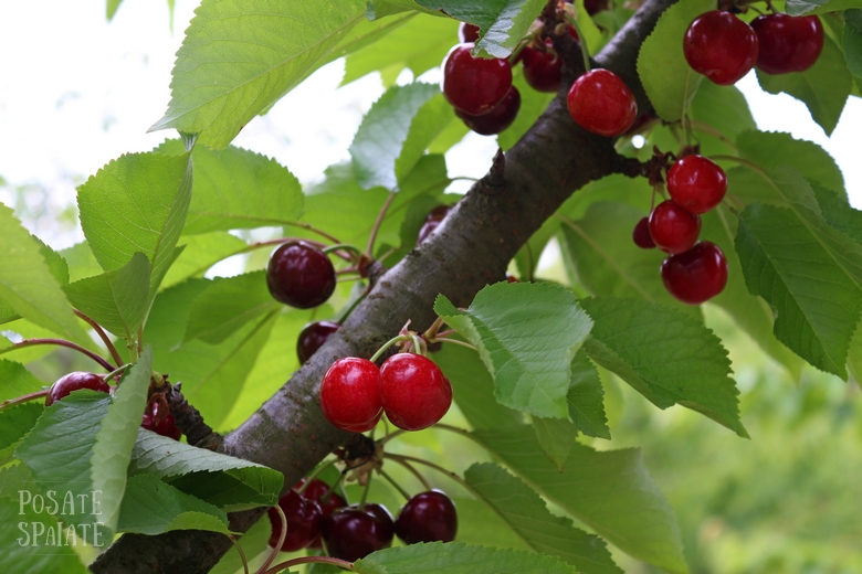 Cherry festival_Posate Spaiate