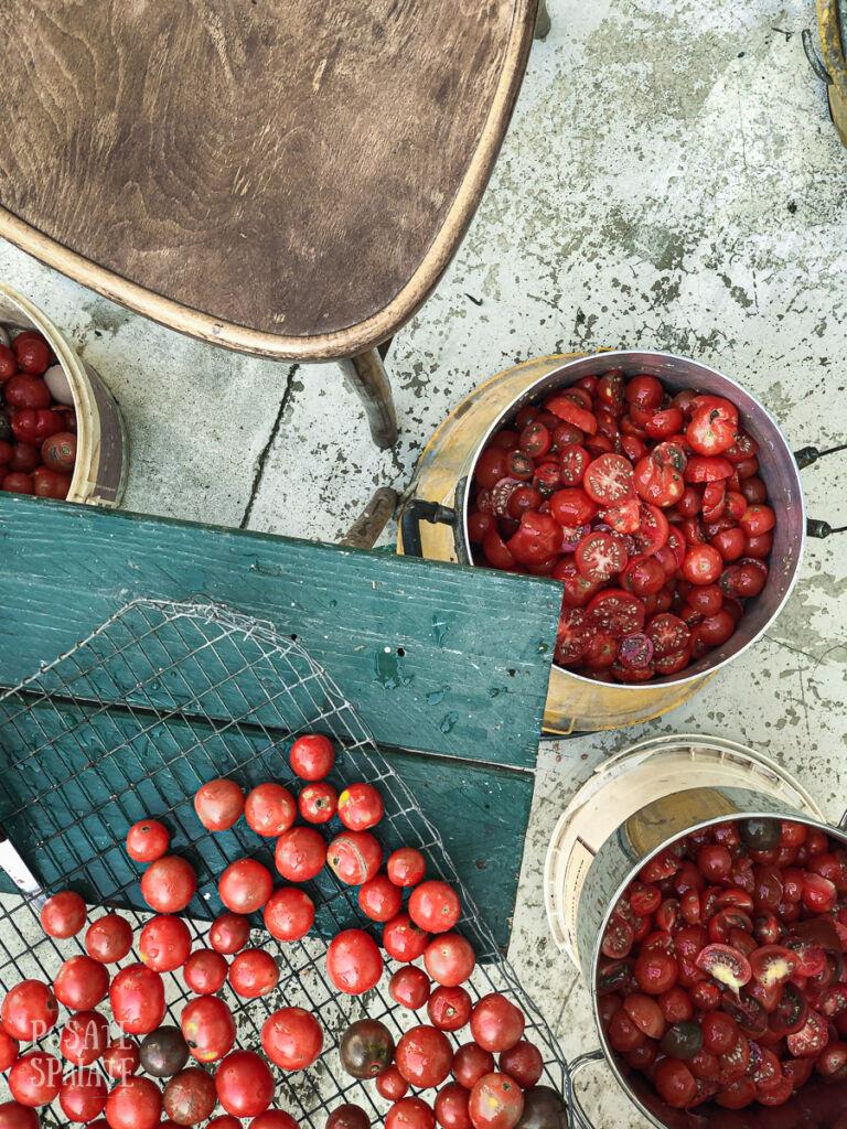 conserva di pomodoro_Posate-Spaiate